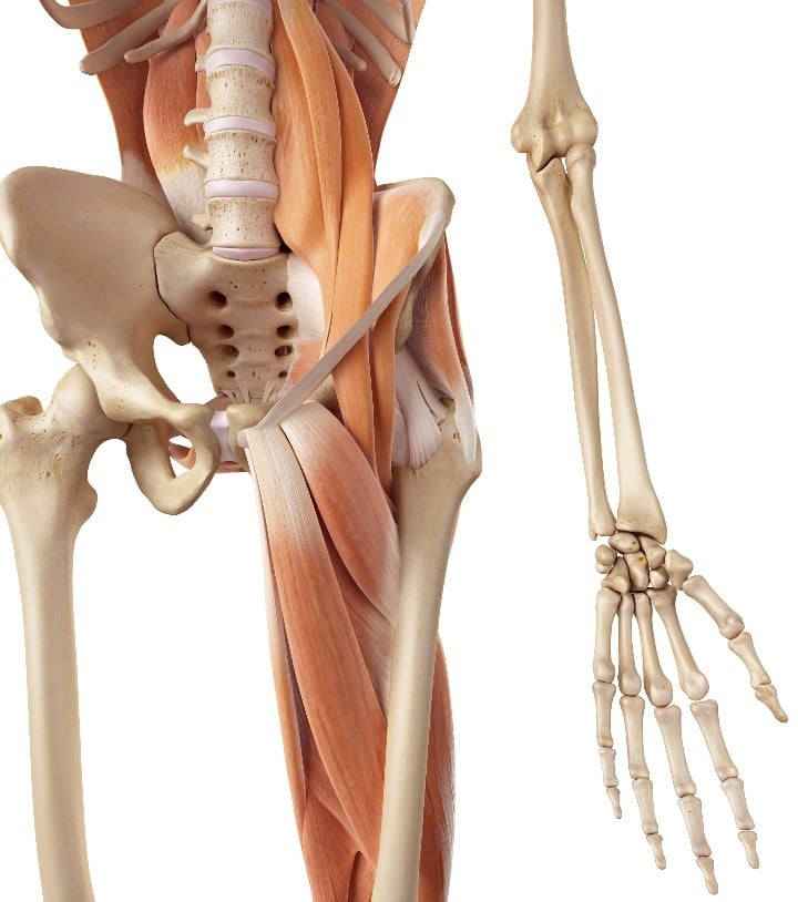 Hip Pain And Groin Pain Carousel Physiotherapy Your Local Physio
