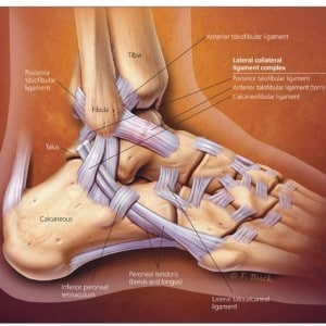 ankle-Carousel Physiotherapy in Cannington | We can fix aches & pain